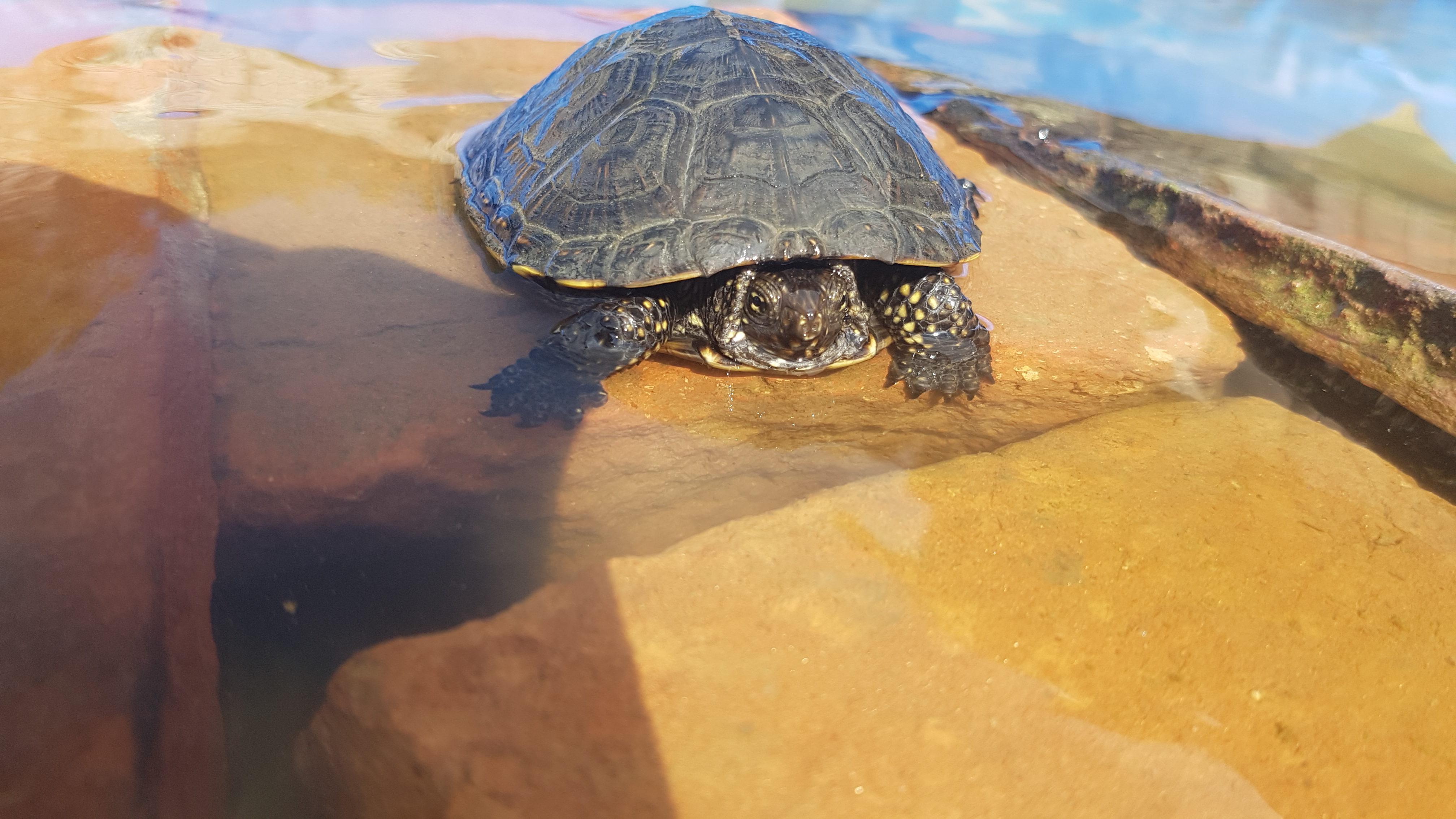 schildpad zwembad